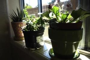 plants grow air